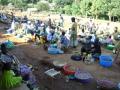 Northwest Smallholders Development Project 337
